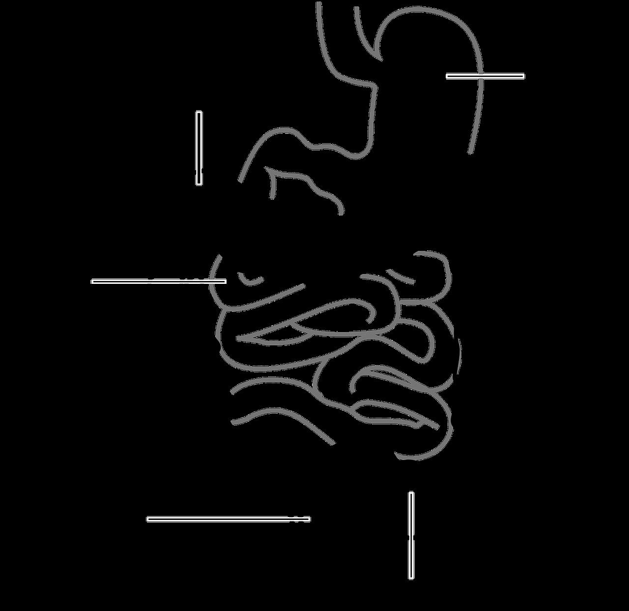 Diät bei Darmentzündung